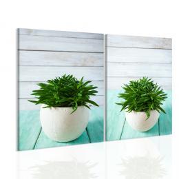 Malvis Obraz zelený kaktus