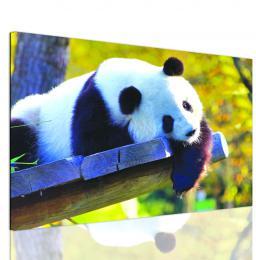 InSmile ® Obraz roztomilá panda