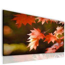 Malvis Kouzlo podzimního listu