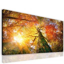InSmile ® Obraz lesní velikán