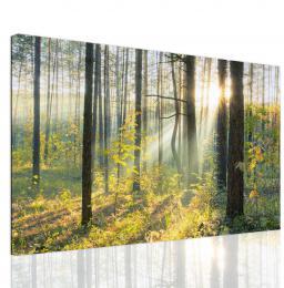 InSmile ® Obraz lesní pohádka