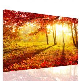 InSmile ® Obraz lesní záøe