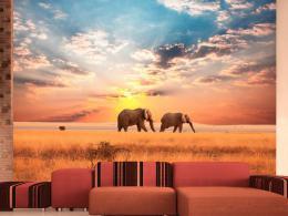 Murando DeLuxe Sloni v savanì