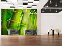 Murando DeLuxe Tapeta bambus - detail  - zvìtšit obrázek