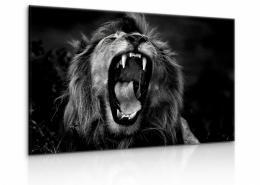 Malvis Obraz èernobílý královský lev