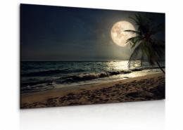 Malvis Obraz Pláž s palmou pøi mìsíci