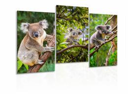 InSmile ® Obraz Pózující koaly