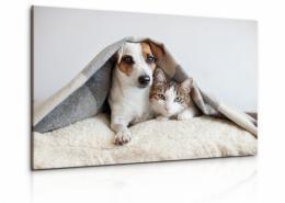 InSmile ® Obraz pes a koèka