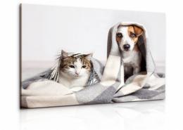 InSmile ® Obraz pes a koèka II