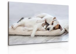 InSmile ® Obraz pes a koèka III