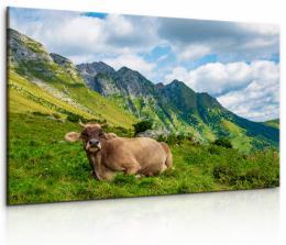 Malvis Obraz Alpská kráva