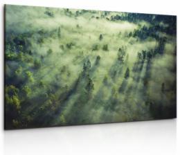 Malvis Obraz tajemný les plný mlhy