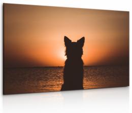 InSmile ® Obraz Pes u západu slunce
