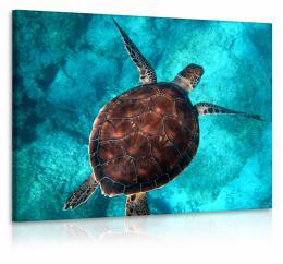 InSmile ® Obraz želva v moøi