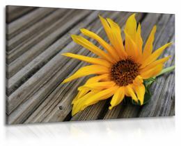 InSmile ® Obraz sluneènice - døevo  - zvìtšit obrázek