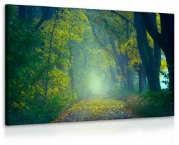 InSmile ® Obraz lesík - cesta