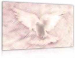 InSmile ® Obraz snová holubice
