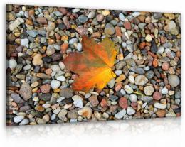 InSmile ® Obraz list na kamenech