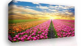 Obraz na stìnu - barevné tulipány - 45x30 cm - InSmile ®