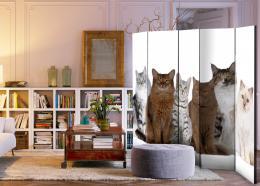 Murando DeLuxe Paraván sladké koèky  - zvìtšit obrázek