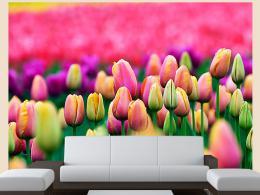 Murando DeLuxe Fototapeta barevné tulipány