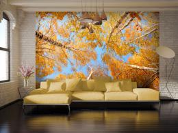 Murando DeLuxe Tapeta podzimní stromy  - zvìtšit obrázek