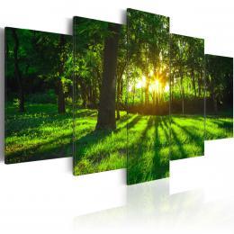 Murando DeLuxe Pìtidílné obrazy - ráno v lese