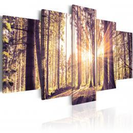 Murando DeLuxe Pìtidílné obrazy - vítání lesa