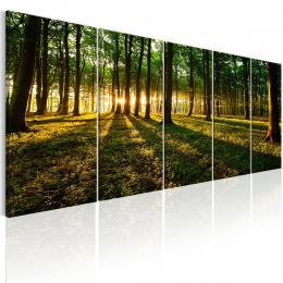 Murando DeLuxe Pìtidílný obraz - stín stromù