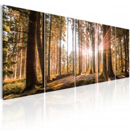 Murando DeLuxe Vícedílný obraz - les v tajemství