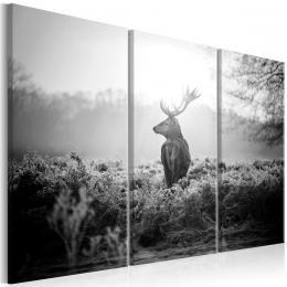 Murando DeLuxe Tøídílný obraz - èernobílý jelen