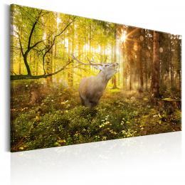 Murando DeLuxe Jelen ráno v lese Velikost  60x40 cm