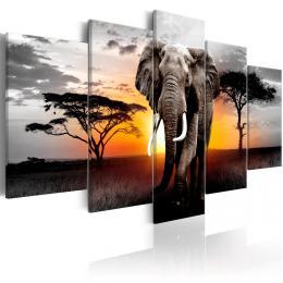 Murando DeLuxe Pìtidílné obrazy - slon v Africe II