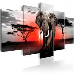 Murando DeLuxe Pìtidílné obrazy - slon v Africe III