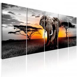 Murando DeLuxe Vícedílný obraz - slon v Africe