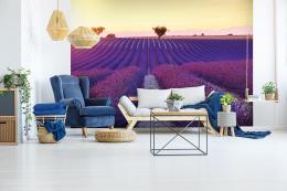 InSmile ® Tapeta Veèerní levandulové pole Vel. (šíøka x výška)  144 x 105 cm