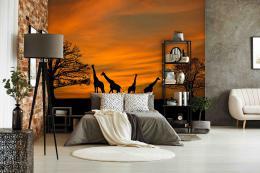 InSmile ® Tapeta africké žirafy Vel. (šíøka x výška)  144 x 105 cm - zvìtšit obrázek
