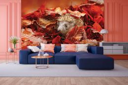 InSmile ® Tapeta Ježek v listí Vel. (šíøka x výška)  144 x 105 cm - zvìtšit obrázek