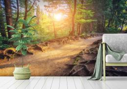 InSmile ® Tapeta Lesní cesta a slunce Vel. (šíøka x výška)  144 x 105 cm - zvìtšit obrázek