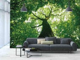 InSmile ® Tapeta Zelená koruna Vel. (šíøka x výška)  144 x 105 cm - zvìtšit obrázek