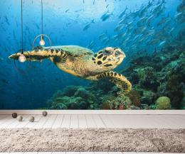 InSmile ® Tapeta moøská želva Vel. (šíøka x výška)  144 x 105 cm - zvìtšit obrázek