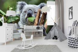 InSmile ® Tapeta Koala Vel. (šíøka x výška)  144 x 105 cm