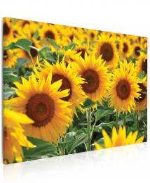 InSmile ® Obraz sluneènice  - zvìtšit obrázek
