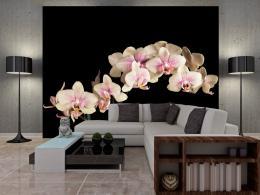 Murando DeLuxe Tapeta -Orchidej na èerné  - zvìtšit obrázek