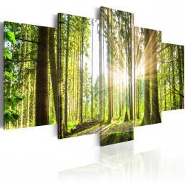 Murando DeLuxe Obraz Lesní království