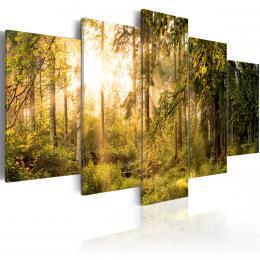 Murando DeLuxe Obraz Sluneèný les