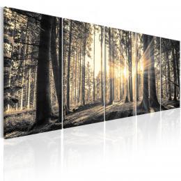 Murando DeLuxe Pìtidílný obraz - les v paprscích  - zvìtšit obrázek