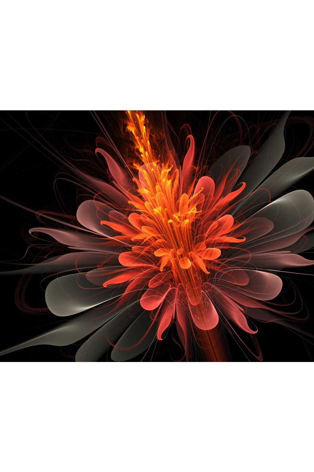 Malvis Obraz Oranžový kvìt  - zvìtšit obrázek