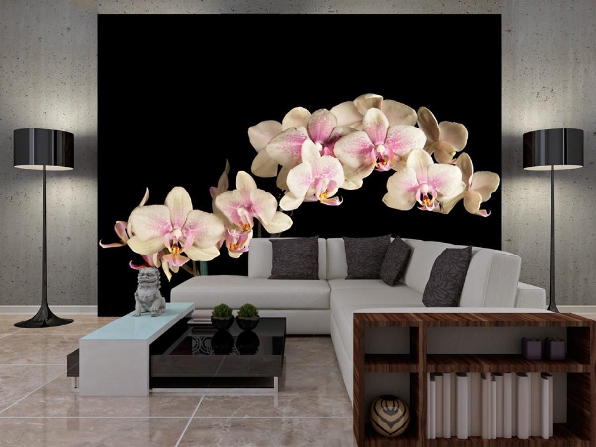 Murando DeLuxe Fototapeta -Orchidej na èerné  - zvìtšit obrázek