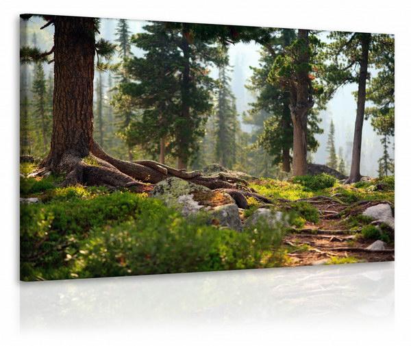 Malvis Obraz lesík  - zvìtšit obrázek